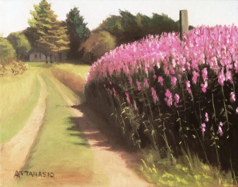 Fireweed, farm road, Cranberry Point, Corea, Maine, Attanasio
