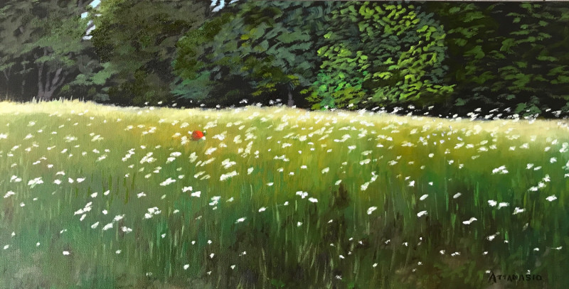 Field of daisies near forest, with red ball